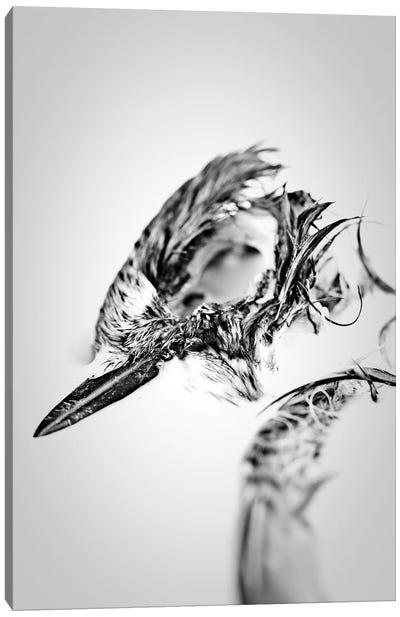 Bird Skull Fine Art Canvas Art Print
