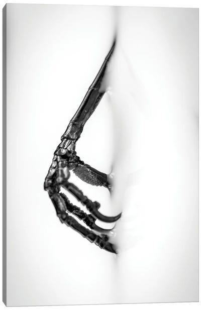 Bird's Foot In Milk Fine Art Canvas Art Print