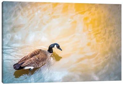 Canada Goose Ins Sun Spotlight Canvas Art Print