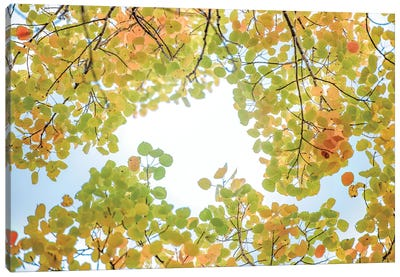 Canopy Of Leaves In The Sky Canvas Art Print