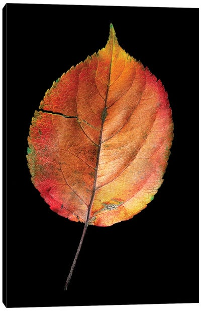 Colorful Withered Leaf Fienart Canvas Art Print