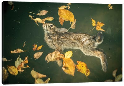 Bunny In A Lake Canvas Art Print