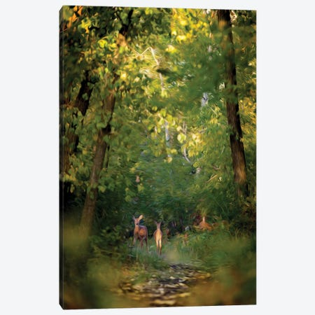 Deer Family In Forest Early Morning Painting Canvas Print #NRV247} by Nik Rave Art Print