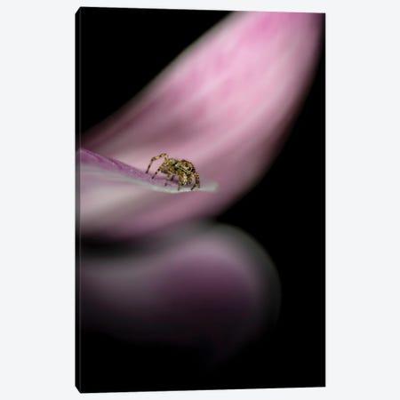Cute Spider On A Flower Fine Art Canvas Print #NRV248} by Nik Rave Canvas Wall Art