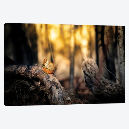 Cute Squirrel On The Branch Canvas Print #NRV249} by Nik Rave Canvas Art