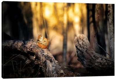 Cute Squirrel On The Branch Canvas Art Print