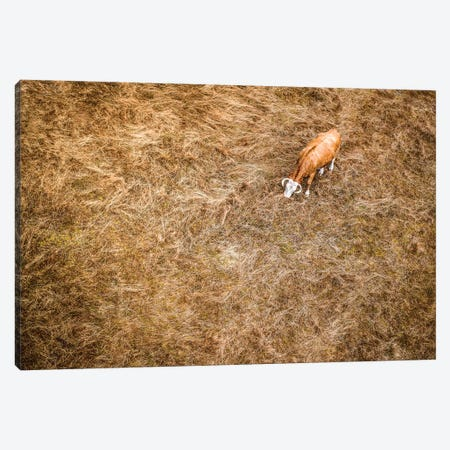 Cow & Grass From Above Canvas Print #NRV24} by Nik Rave Canvas Print