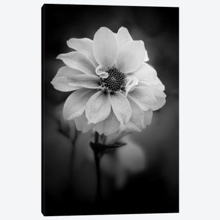 Dew White Flower Canvas Print #NRV251} by Nik Rave Canvas Print