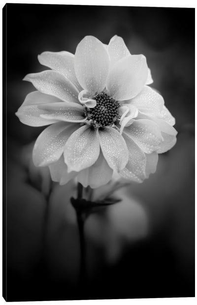 Dew White Flower Canvas Art Print