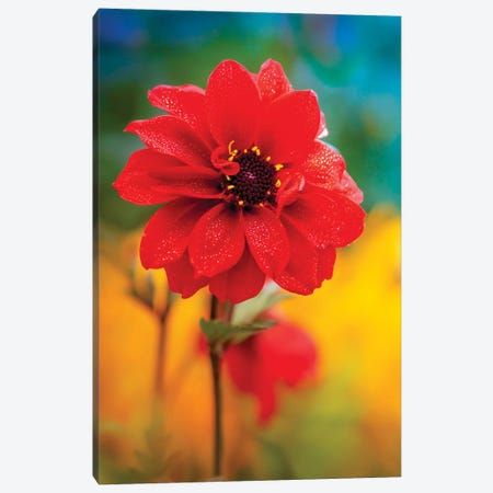 Dew Red Flower Canvas Print #NRV255} by Nik Rave Canvas Artwork