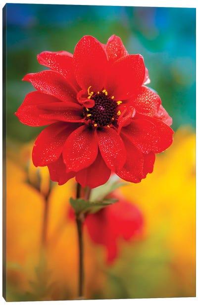 Dew Red Flower Canvas Art Print