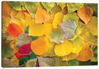 Fallen Leaves Vibrant Canvas Art Print