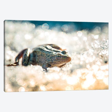 Frog On The Ice During The Winter Canvas Print #NRV257} by Nik Rave Canvas Wall Art