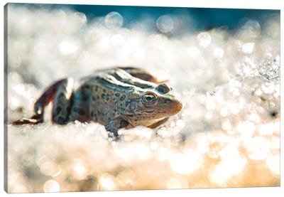 Frog On The Ice During The Winter Canvas Art Print