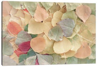 Fallen Leaves Creamy Canvas Art Print