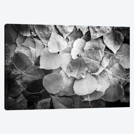 Fallen Leaves Monochrome Canvas Print #NRV260} by Nik Rave Canvas Wall Art