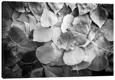 Fallen Leaves Monochrome Canvas Art Print