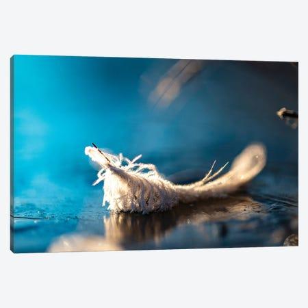 Frozen Feather Canvas Print #NRV263} by Nik Rave Canvas Art