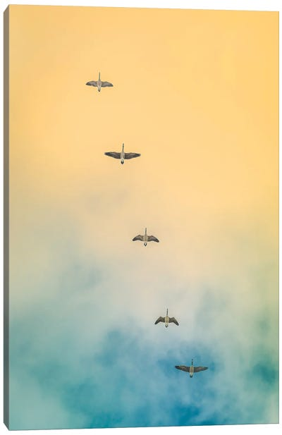 Geese In The Sky Canvas Art Print