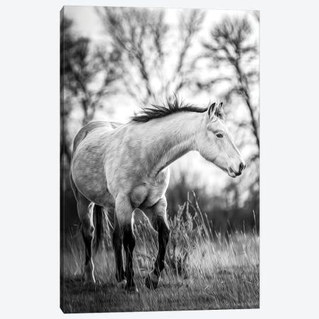 Grey Horse Portrait Black And White Canvas Print #NRV265} by Nik Rave Art Print