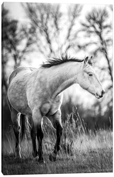 Grey Horse Portrait Black And White Canvas Art Print