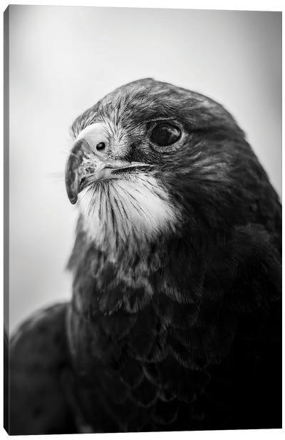 Hawk Portrait Canvas Art Print