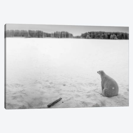 Edi: Polar Bear Looking Into Horizon Canvas Print #NRV26} by Nik Rave Art Print