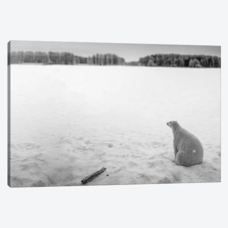 Edi: Polar Bear Looking Into Horizon Canvas Print #NRV26} by Nik Rave Art Print