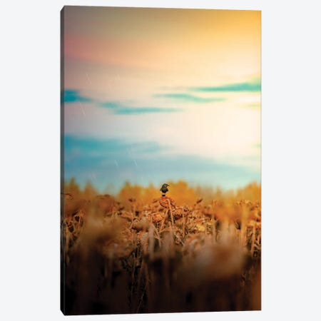 Magpie On A Sunflower Rainy Day Canvas Print #NRV273} by Nik Rave Canvas Print