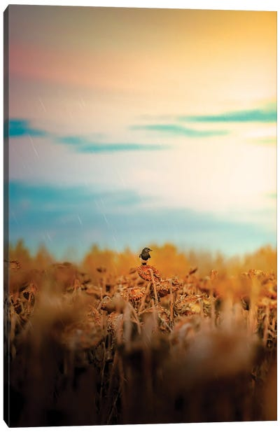 Magpie On A Sunflower Rainy Day Canvas Art Print