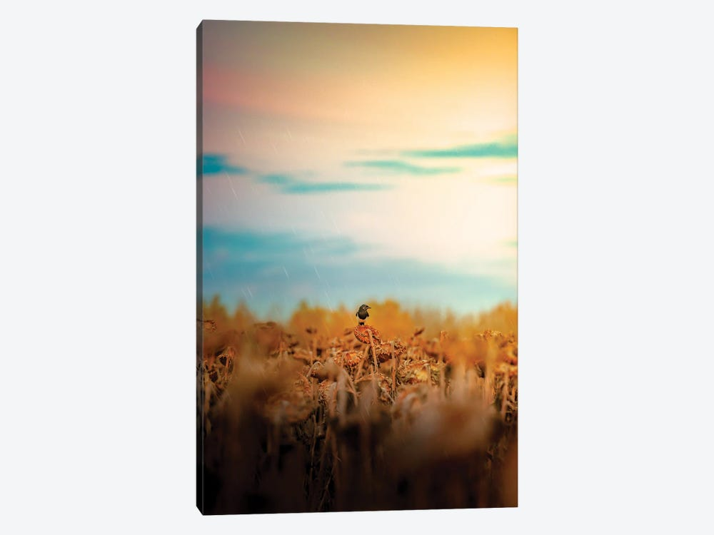 Magpie On A Sunflower Rainy Day by Nik Rave 1-piece Canvas Print