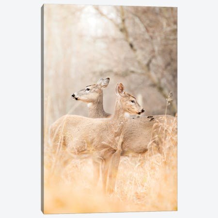 Mom And Fawn Deer Portrait Canvas Print #NRV275} by Nik Rave Canvas Artwork