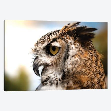 Owl Profile Canvas Print #NRV278} by Nik Rave Art Print