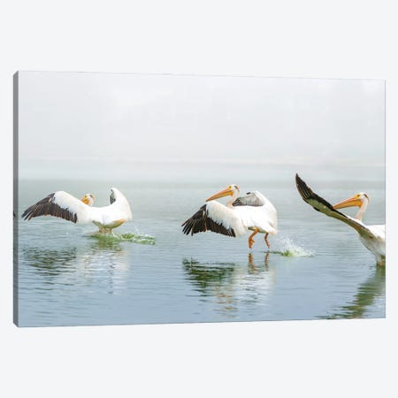 Pelican Sequence Landing Canvas Print #NRV280} by Nik Rave Canvas Art