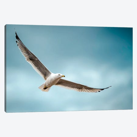 Seagull At Epic Flight Canvas Print #NRV282} by Nik Rave Canvas Wall Art