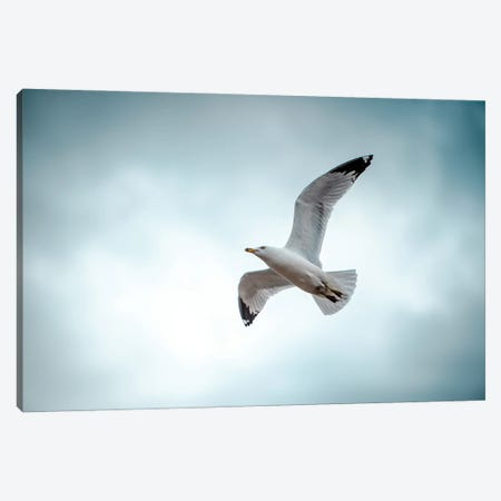 Seagull At The Take Off Canvas Print #NRV283} by Nik Rave Canvas Artwork
