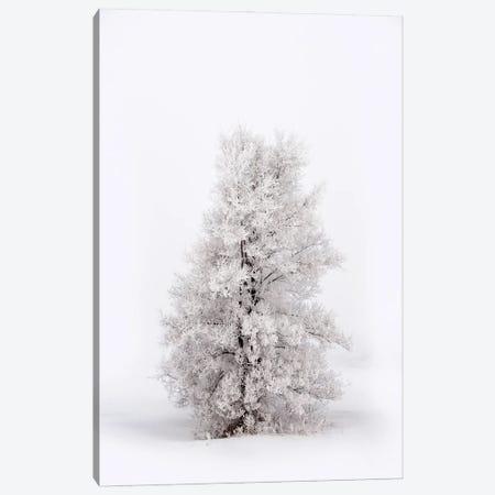 Snowy Tree At Winter Canvas Print #NRV287} by Nik Rave Canvas Print