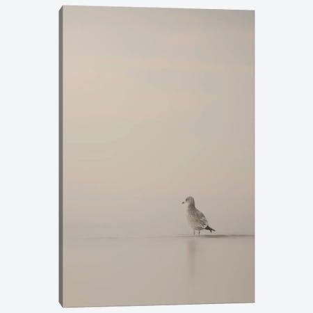 Seagull Foggy Morning Canvas Print #NRV289} by Nik Rave Canvas Art