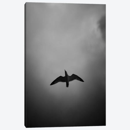 Seagull Reflection Black And White Canvas Print #NRV290} by Nik Rave Canvas Art Print