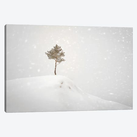 Winter Tree On The Hill Canvas Print #NRV293} by Nik Rave Canvas Art Print