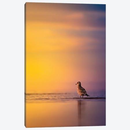 Sunrise Seagull Canvas Print #NRV294} by Nik Rave Canvas Art