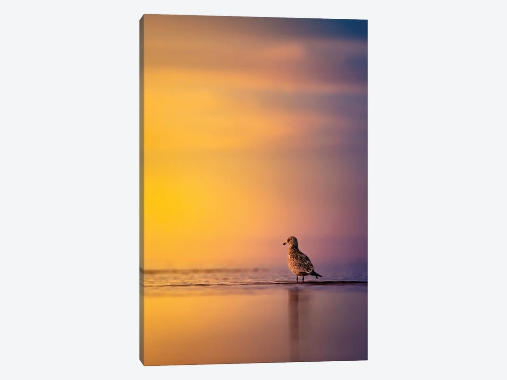 Sunrise Seagull by Nik Rave 1-piece Canvas Artwork