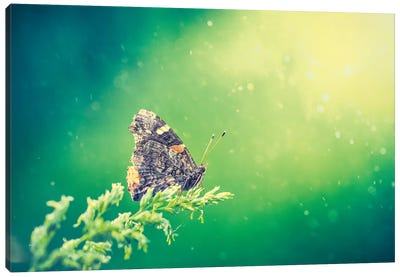 Butterfly In Beam Of Light Canvas Art Print