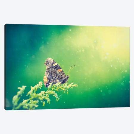 Butterfly In Beam Of Light Canvas Print #NRV29} by Nik Rave Canvas Art