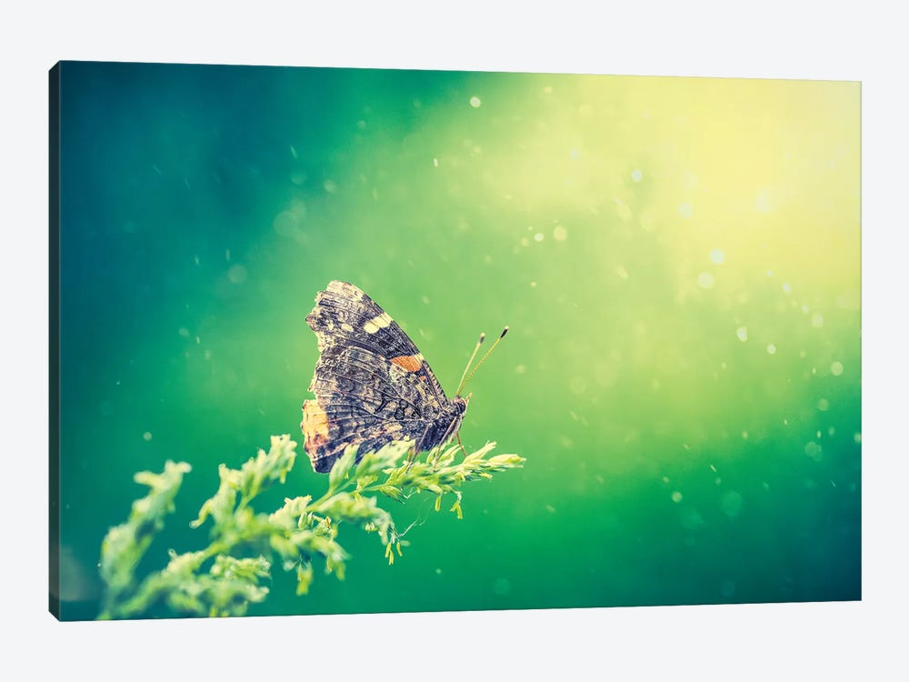 Butterfly In Beam Of Light by Nik Rave 1-piece Art Print