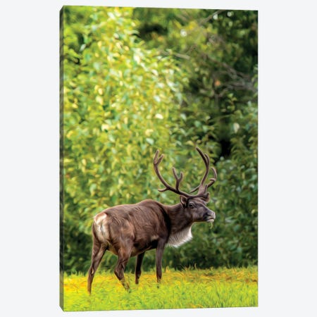 Caribou In Spotlight Drawing Canvas Print #NRV302} by Nik Rave Canvas Print