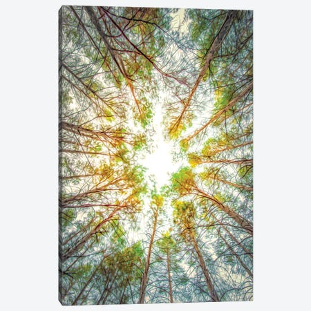 Canopy Of Trees Painting Canvas Print #NRV305} by Nik Rave Canvas Wall Art