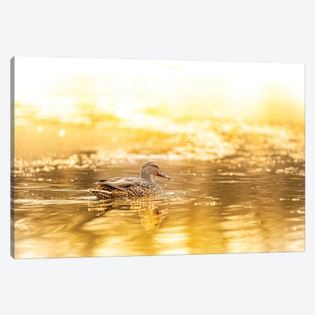 Duck In A Bright Sunlight Canvas Print #NRV311} by Nik Rave Canvas Art