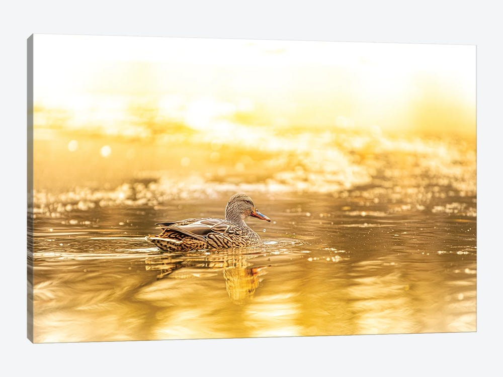 Duck In A Bright Sunlight by Nik Rave 1-piece Canvas Art