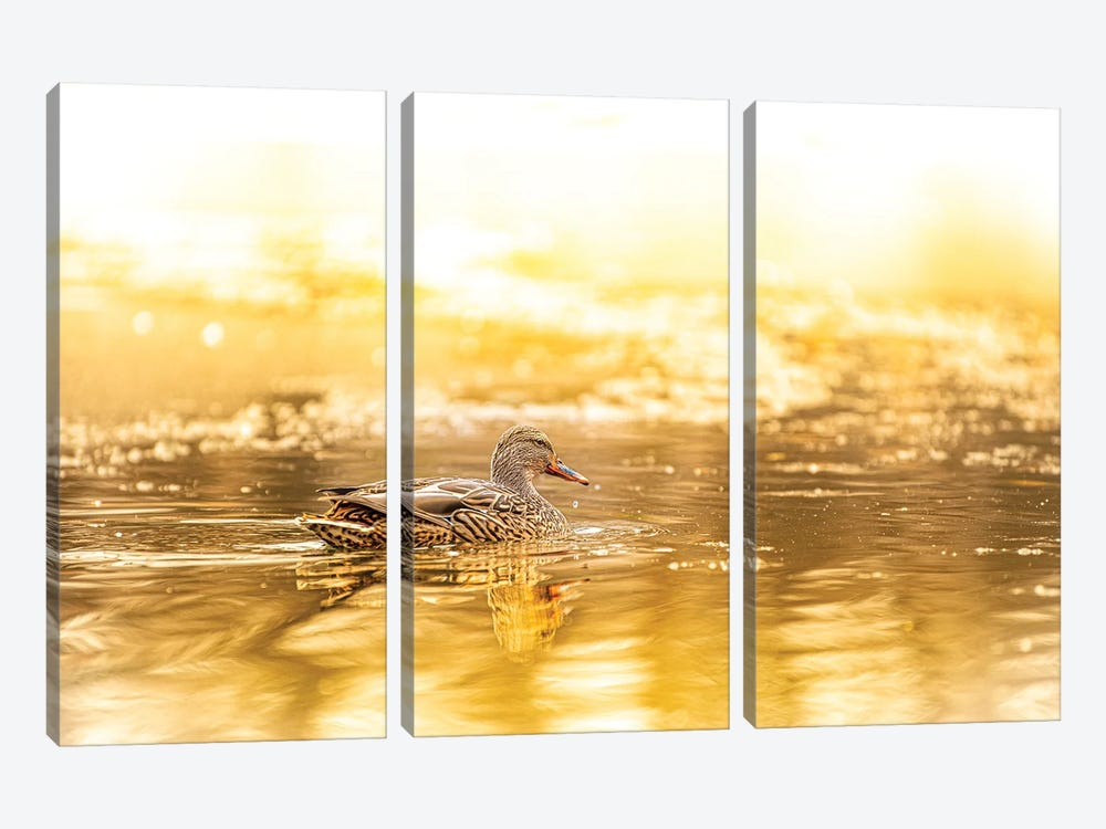 Duck In A Bright Sunlight by Nik Rave 3-piece Canvas Art